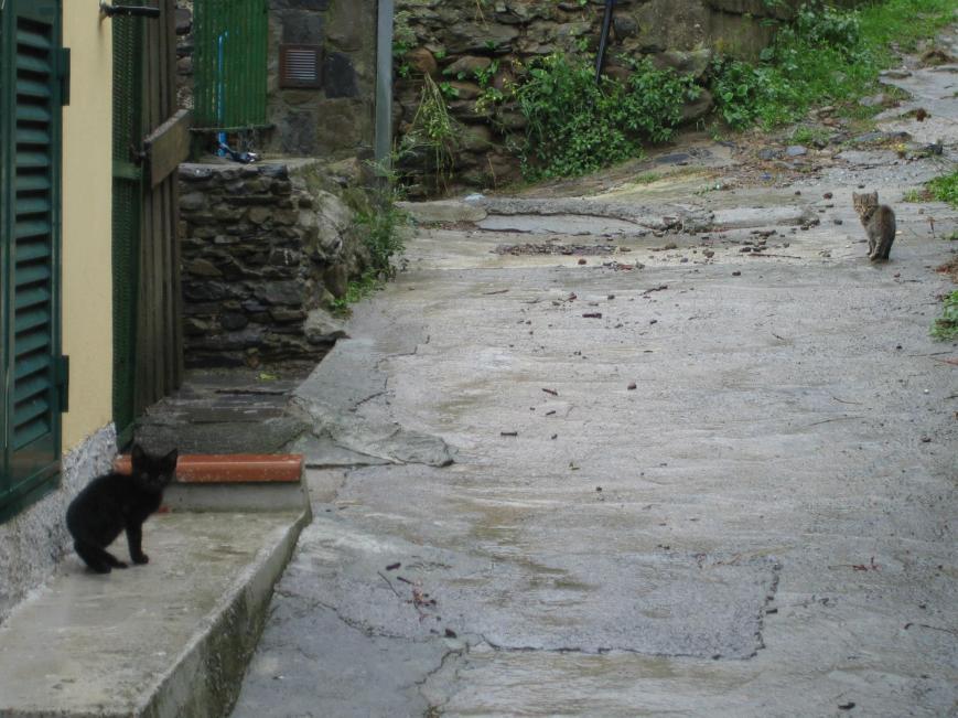 Manarola Cats