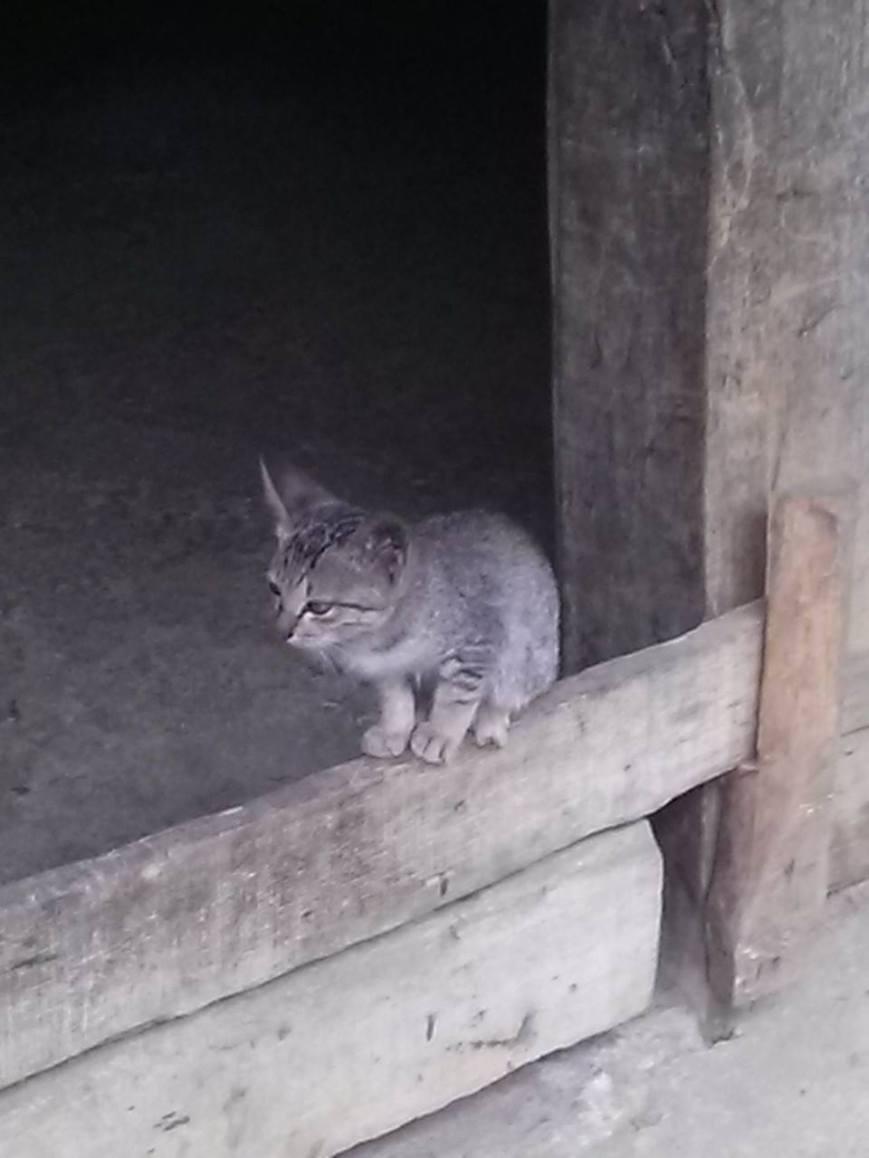 An awesome kitten.